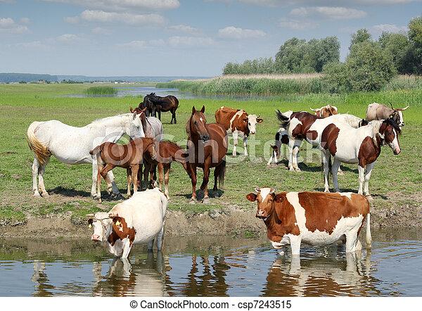 Animali fattoria fattoria fiume animali immagini d for Piani di fattoria tedesca