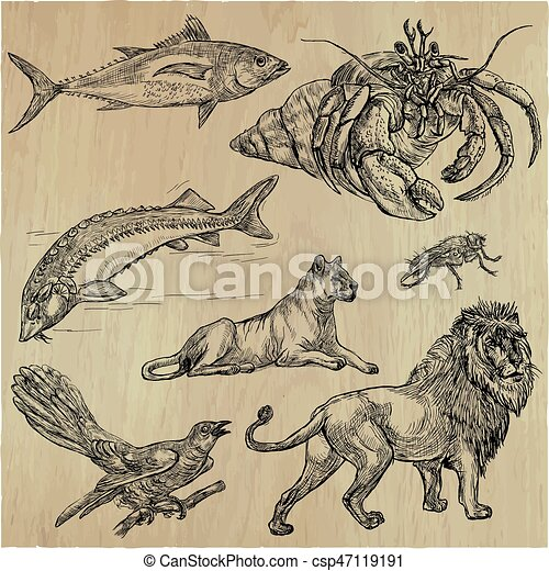 Animals - An hand drawn vector pack, line art - csp47119191