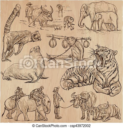 animals - an hand drawn vector pack, collection. - csp43972002