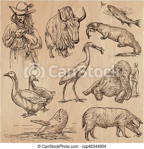 Animals around the World - An hand drawn vector pack. Line art. - csp46344904