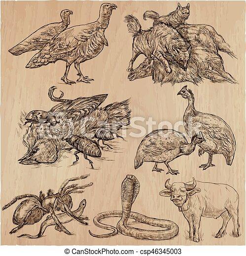 Animals around the World - An hand drawn vector pack. Line art. - csp46345003