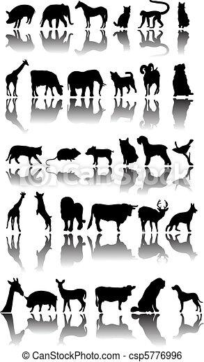 Animals - csp5776996