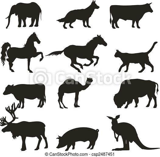 animals  - csp2487451