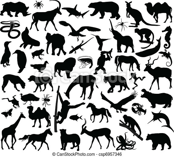 Animals collection - csp6957346