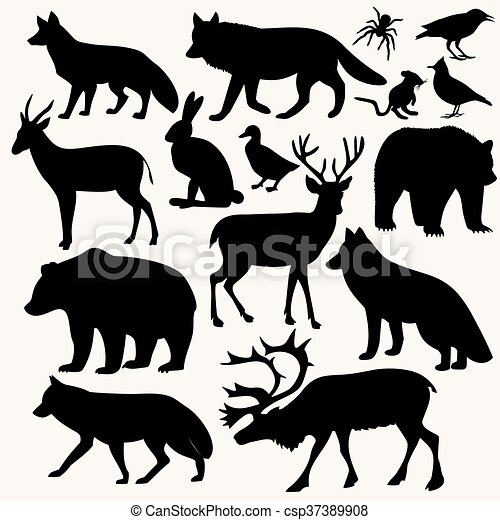 animals in the forest - csp37389908