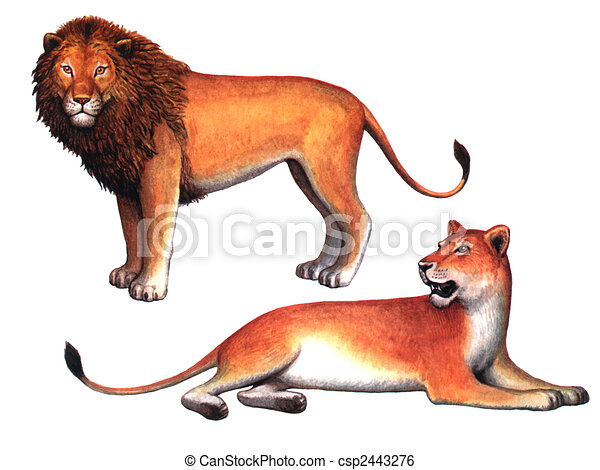 colored drawing on the paper animals lion and a lioness stock rh canstockphoto com lioness head clipart lioness clipper1885