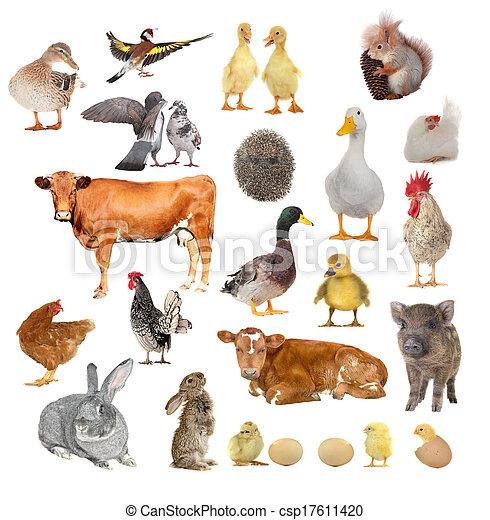 animals  - csp17611420