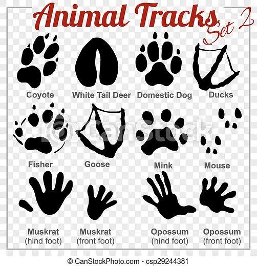Animals Tracks - vector set, - csp29244381