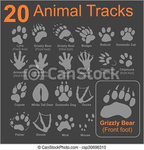 Animals Tracks - vector set - csp30696310