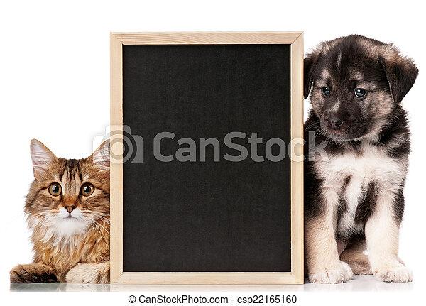 animaux familiers, tableau noir - csp22165160