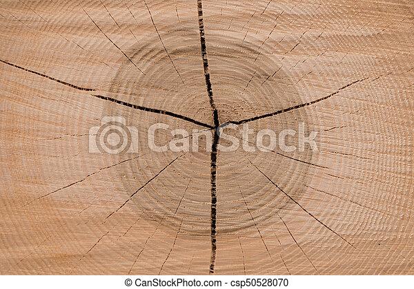 anneaux arbre, année - csp50528070