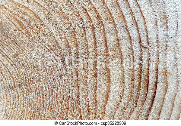 anneaux arbre, pin - csp35228309
