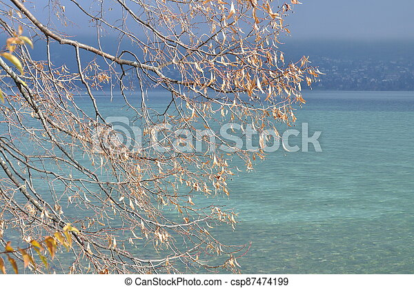 Annecy lake and autumn leaves - csp87474199