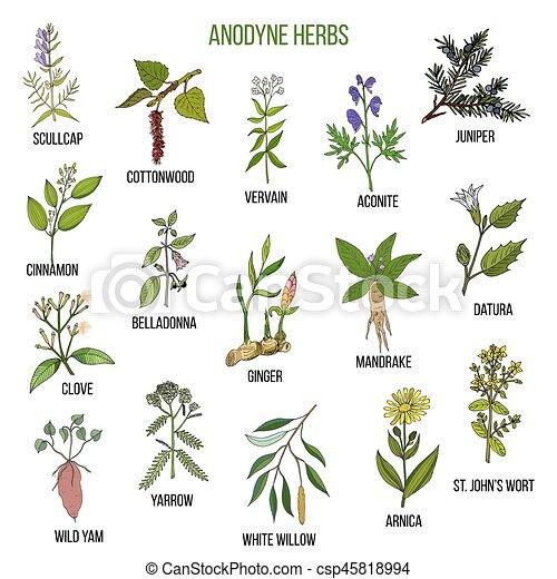 Anodyne herbs. Hand drawn set of medicinal plants - csp45818994