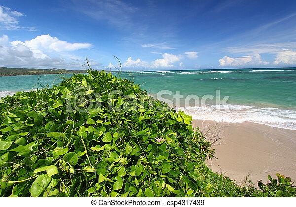 Anse de Sables Beach - Saint Lucia - csp4317439
