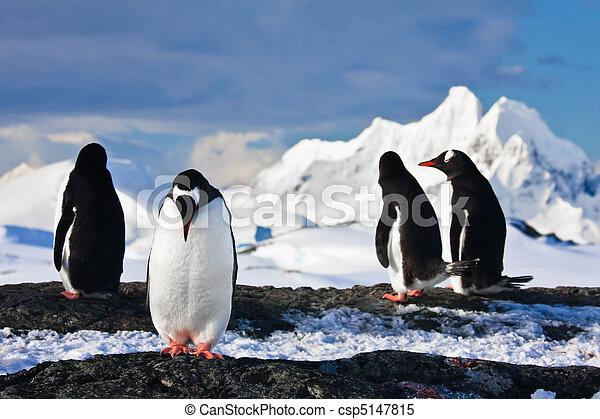 antártica, pingüins, rocha - csp5147815