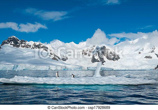 antártida, pingüinos, iceberg, gentoo - csp17928689
