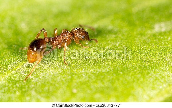 Ant on a green leaf. close - csp30843777