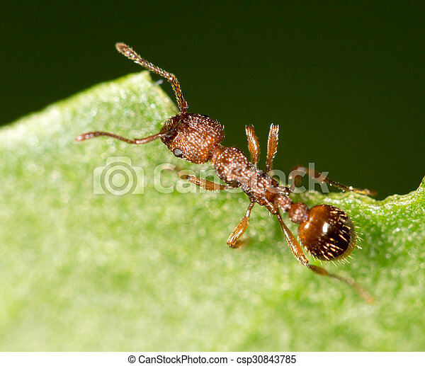 Ant on a green leaf. close - csp30843785