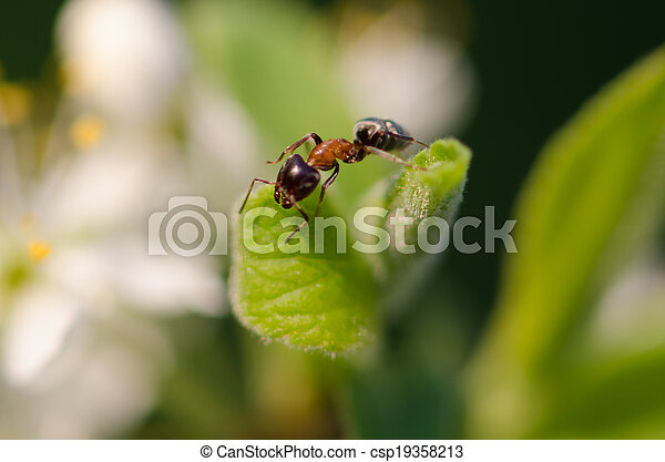 Ant on a green leaf - csp19358213
