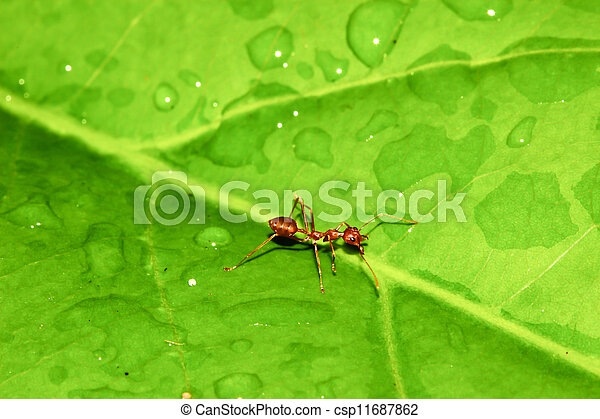 Ant on green leaf. - csp11687862