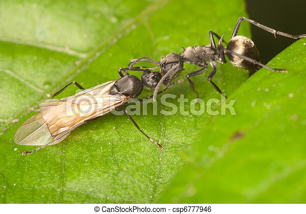 ant on green leaf - csp6777946
