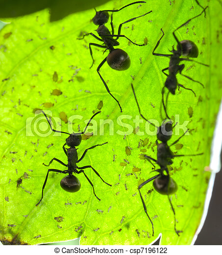 ant on green leaf - csp7196122