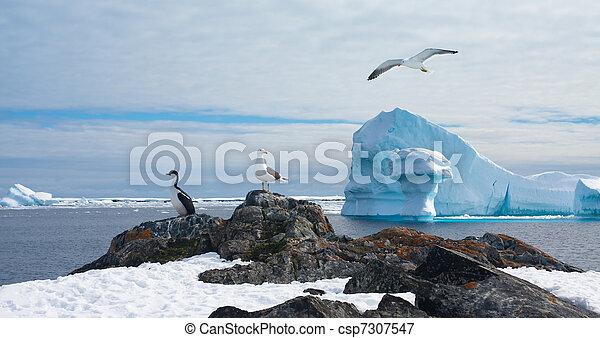 Antarctic landscape - csp7307547