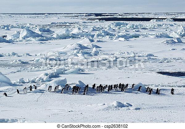 Antarctic penguin march - csp2638102