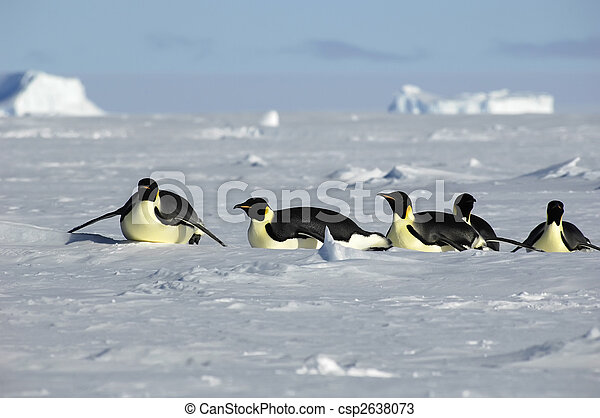 Antarctic penguin procession - csp2638073