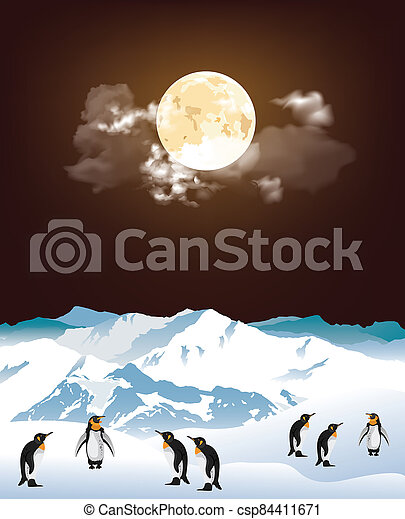Antarctic penguins at night - csp84411671