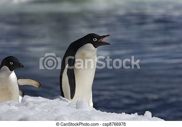 Antarctic Penguins - csp8766978