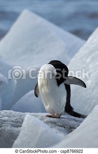 Antarctic Penguins - csp8766922