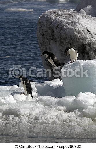 Antarctic Penguins - csp8766982