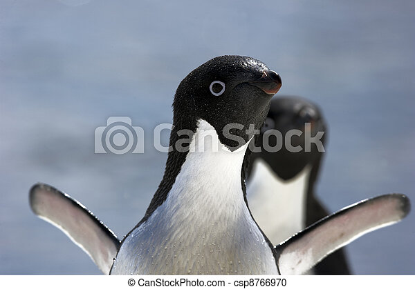 Antarctic Penguins - csp8766970