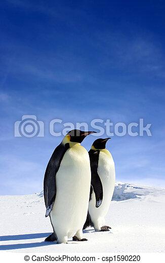 Antarctic Wildlife - csp1590220