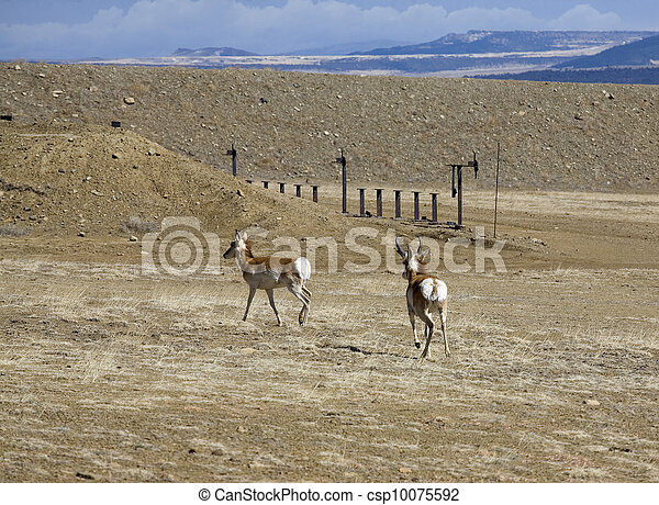 Antelope down range - csp10075592