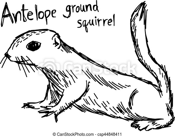 Antelope ground squirrel - vector illustration sketch hand drawn with black lines, isolated on white background - csp44848411