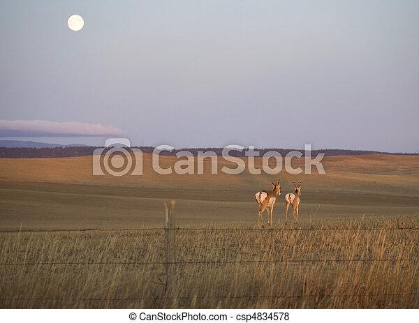 antelope moonrise - csp4834578
