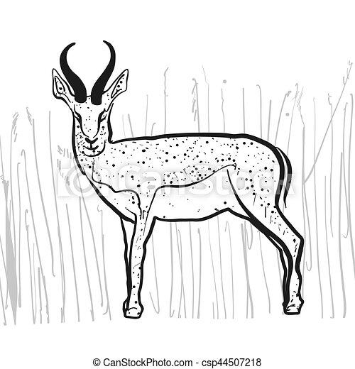 Antelope Springbok - csp44507218