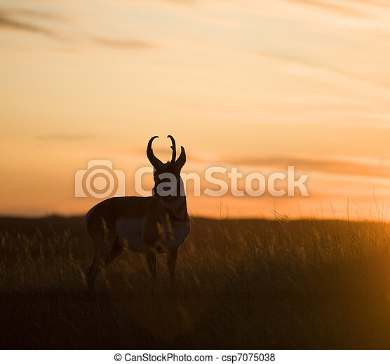 antelope sunset - csp7075038
