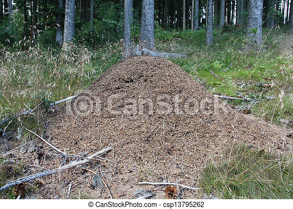 Anthill in the forest - csp13795262