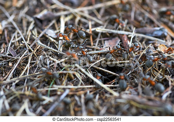 Anthill in the forest - csp22563541