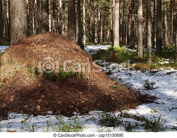 Anthill in the forest         - csp15130695
