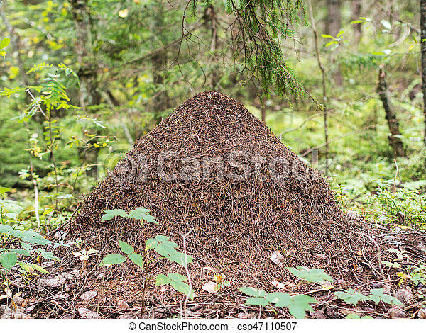 anthill in the forest - csp47110507