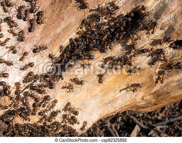 anthill in the tree - csp82325892