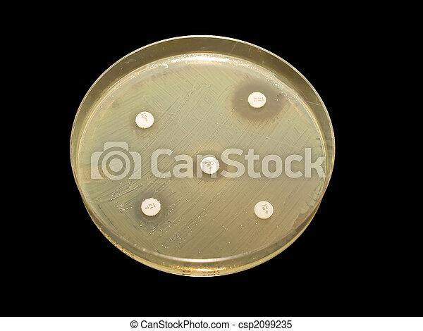 Antibiotic discs - csp2099235