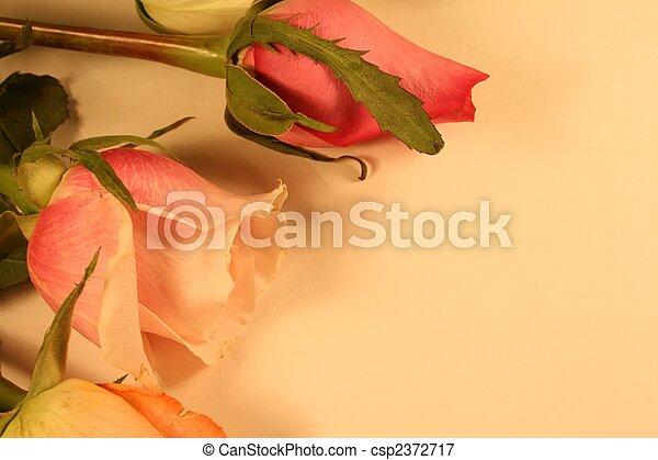 anticaglia, rose - csp2372717