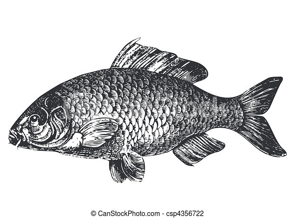 antigüedad, carpa, pez, ilustración - csp4356722