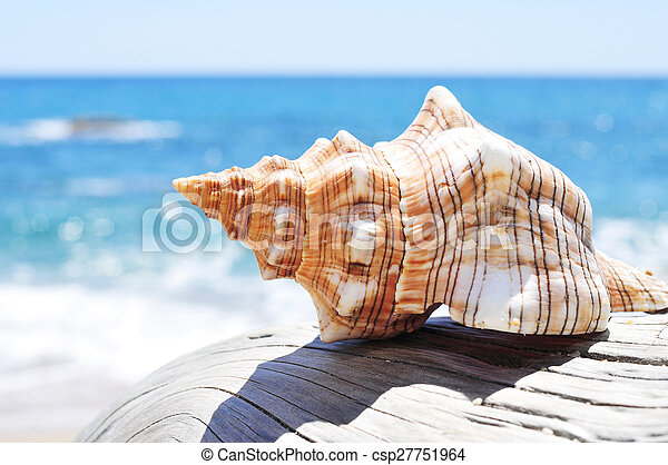 antigas, conch, tronco árvore, washed-out, praia - csp27751964